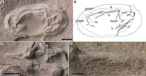 Exceptionally preserved eggs and embryos reveal life history of a pterosaur