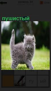 на лужайке прыгает пушистый котенок серого цвета