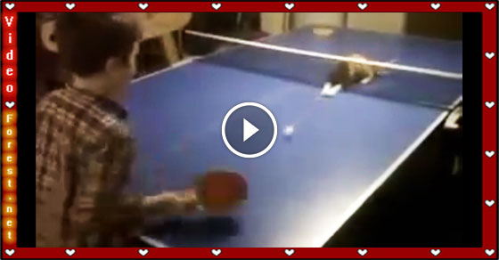 Intelligent cat playing table tennis with her owner perfectly