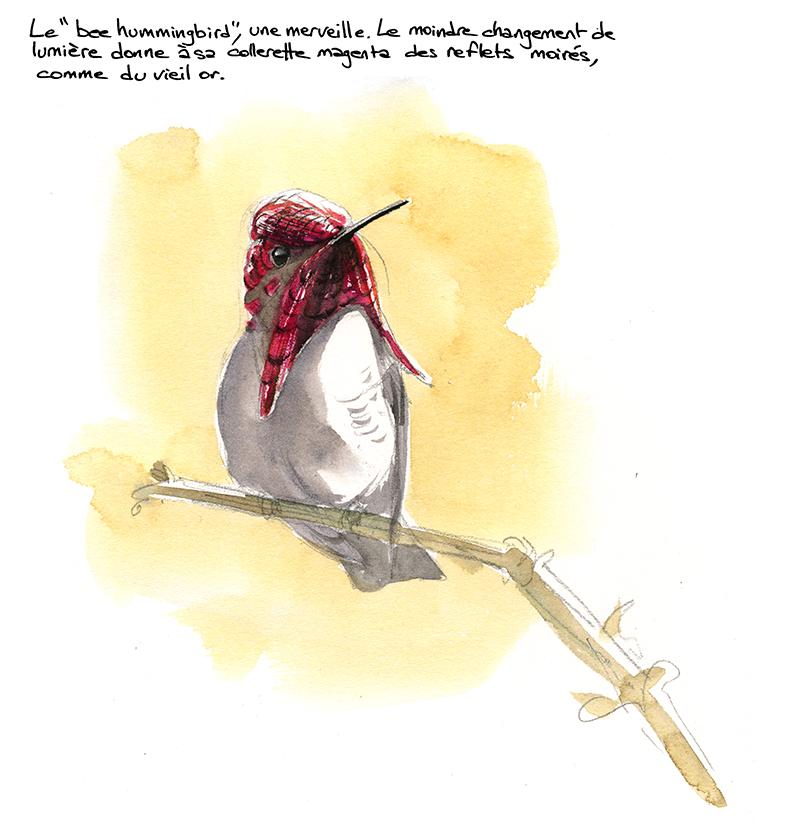 bee hummingbird, colibri d'Elena, reflets moirés, aquarelle
