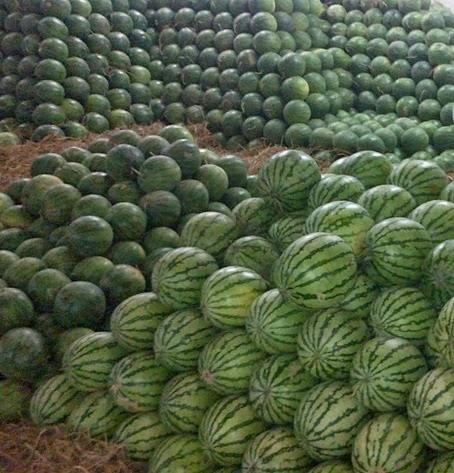 gimana rasanya punya semangka banyak