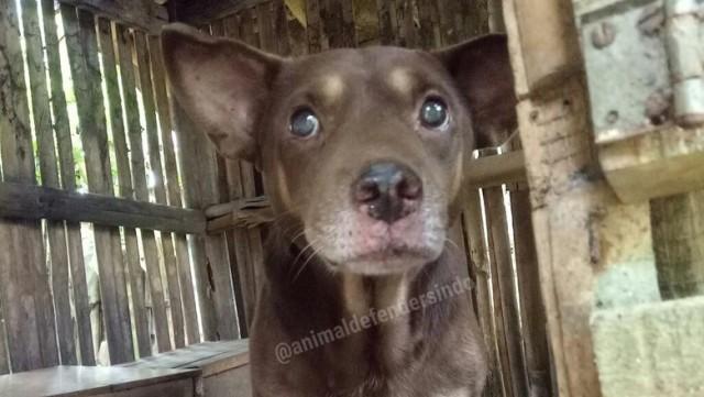 Heboh Isu Anjing Jelmaan Babi Ngepet di Panongan Tangerang