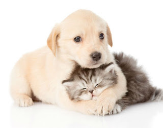 Cuidados com cães e gatos filhotes