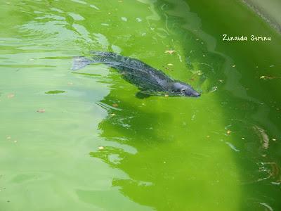 zoo-roma-foca
