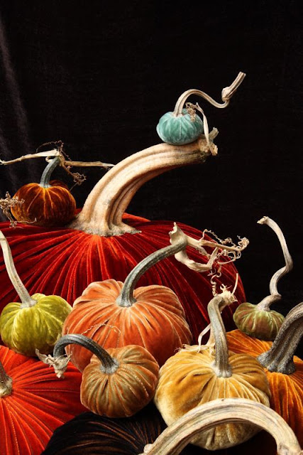 Colorful, velvet pumpkins against black background - Fall decor inspiration