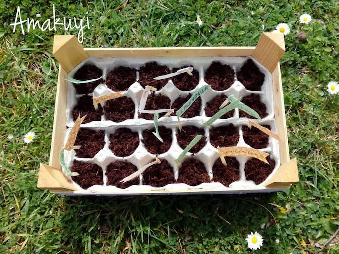 semillero con hueveras de cartón
