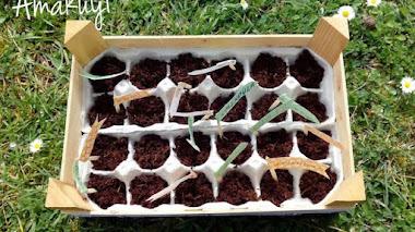 Cómo hacer un semillero con hueveras de cartón