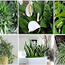 These Plants Are Oxygen Bombs. You Must Have At Least One Of Them To Refresh Your Home!