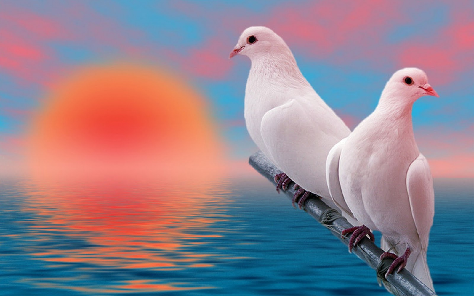 Mp3 Download Free Forever Incredible Images Love Birds High Resolution