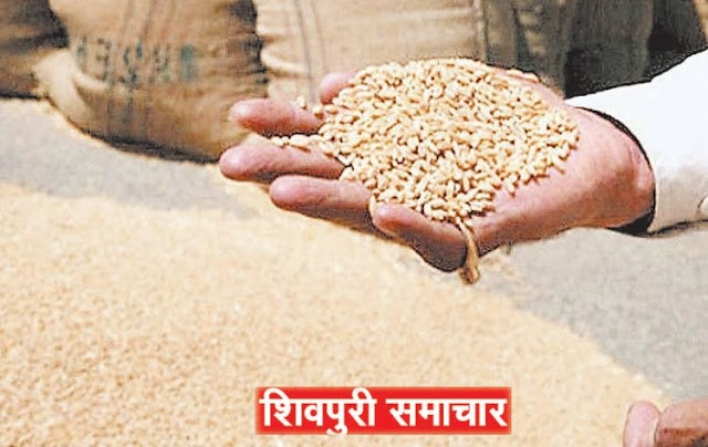 5 बीज विक्रेताओं की दुकान पर मिले अमानक बीज, लाईसेंस निरस्त | Shivpuri News