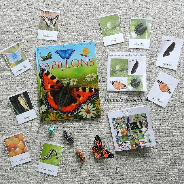 || Activités autour des cartes de nomenclature des papillons