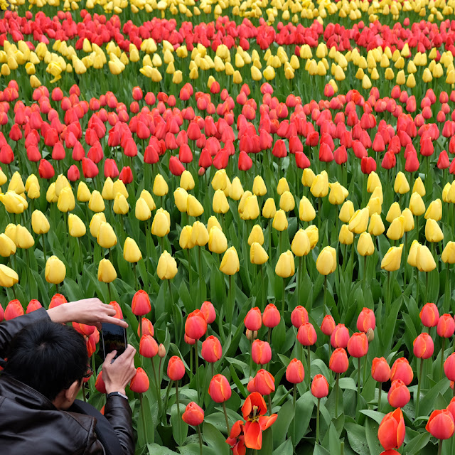Keukenhof workshop