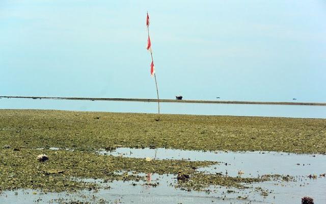 Pulau Gosong di Lasem, Rembang berasal dari endapan koral dan karang