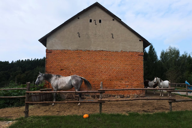 Modry Ganek www.soclosesogood.pl