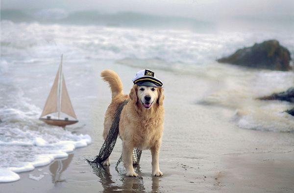 Perro labrador en la playa