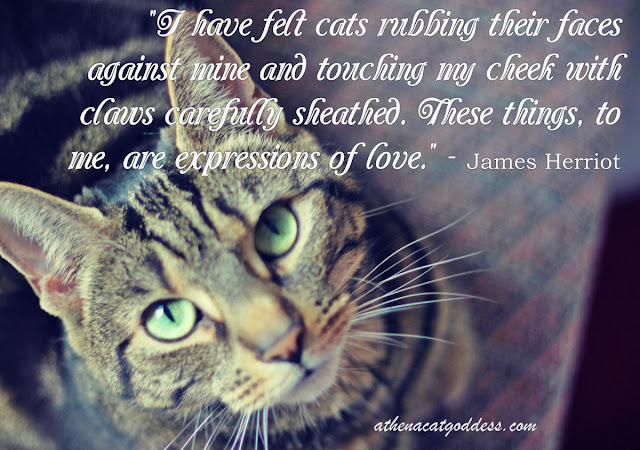 A cat's expression of love