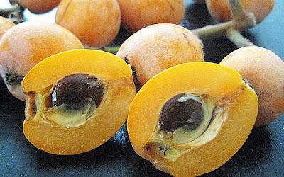 buah loquat