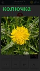 Изображение колючки с распустившимся ярко желтым цветком, побеги от которого во все стороны