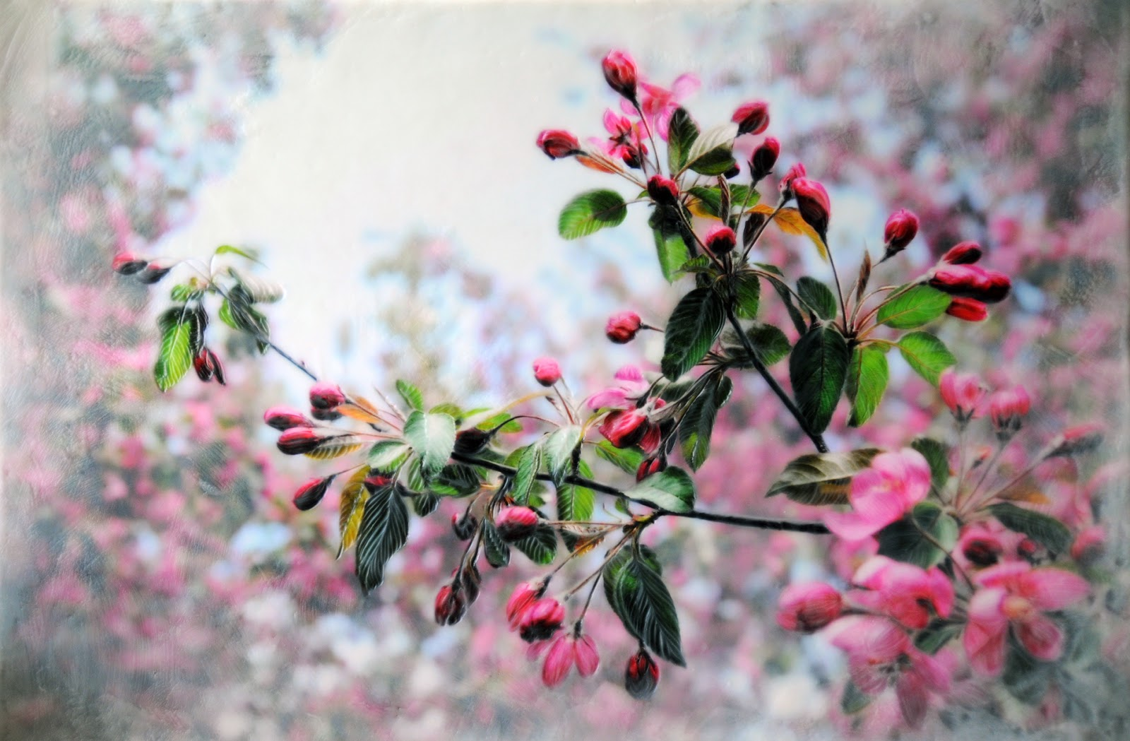 north country girl crab apple tree blossoms encaustic. Black Bedroom Furniture Sets. Home Design Ideas