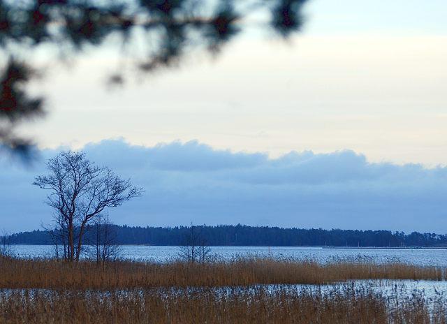itämeri, talvi, suomi, finland, kaislikko