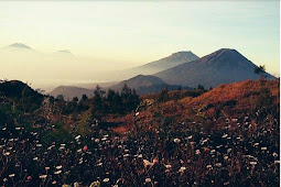 warna-warni bunga daisy di gunung Prau Dieng