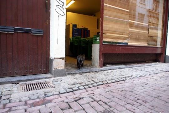 Rue des Dominicains