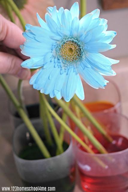 easy-flower-science-project-toddler-preschool-kindergarten-first-grade-2nd-kids-activities-summer-bucket-list