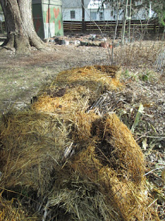 Beetle Bump with hay added