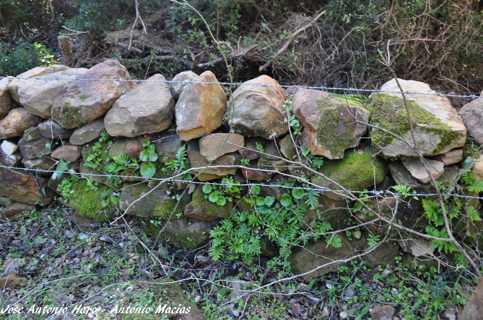 Nos vamos a campear vallas de piedra en seco en los alcornocales - Vallas de piedra ...