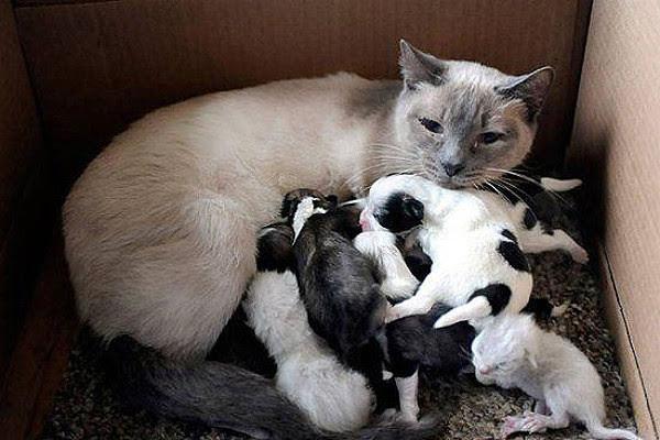 Чужих не бывает животные кормят чужих зверей кошка кормит собак