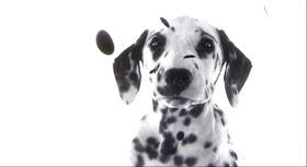 Vagebond S Movie Screenshots 102 Dalmatians 2000