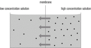movement of molecules from high to low concentration