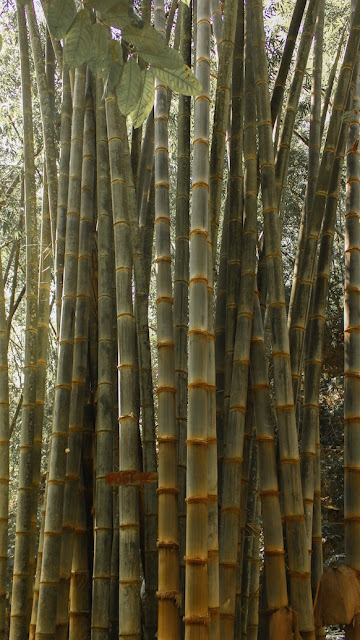 hutan bambu air terjun kedung gender