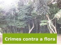 Crimes contra a flora