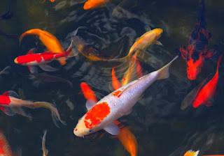 filter-kolam-ikan.jpg