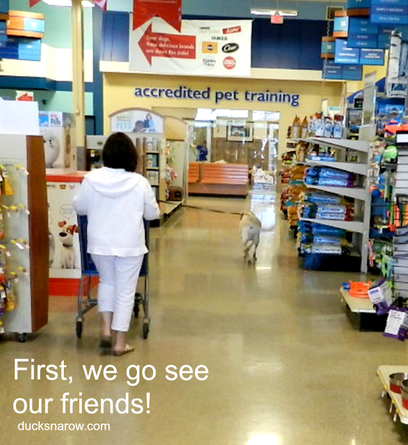 arriving at PetSmart to shop with my yellow lab