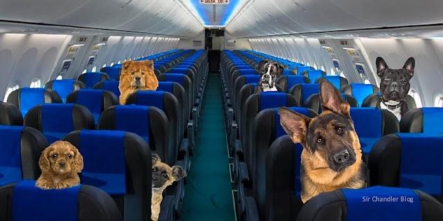 Casi 14.000 mascotas viajaron en avión en 2016