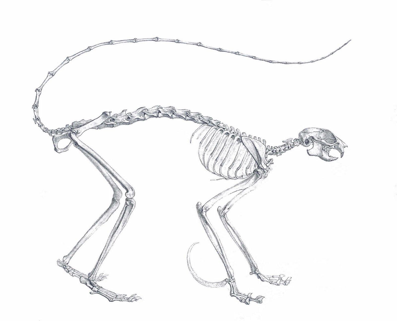 Bear Skull Diagram Redarc Solenoid Wiring Animal Anatomy Comparative Foot