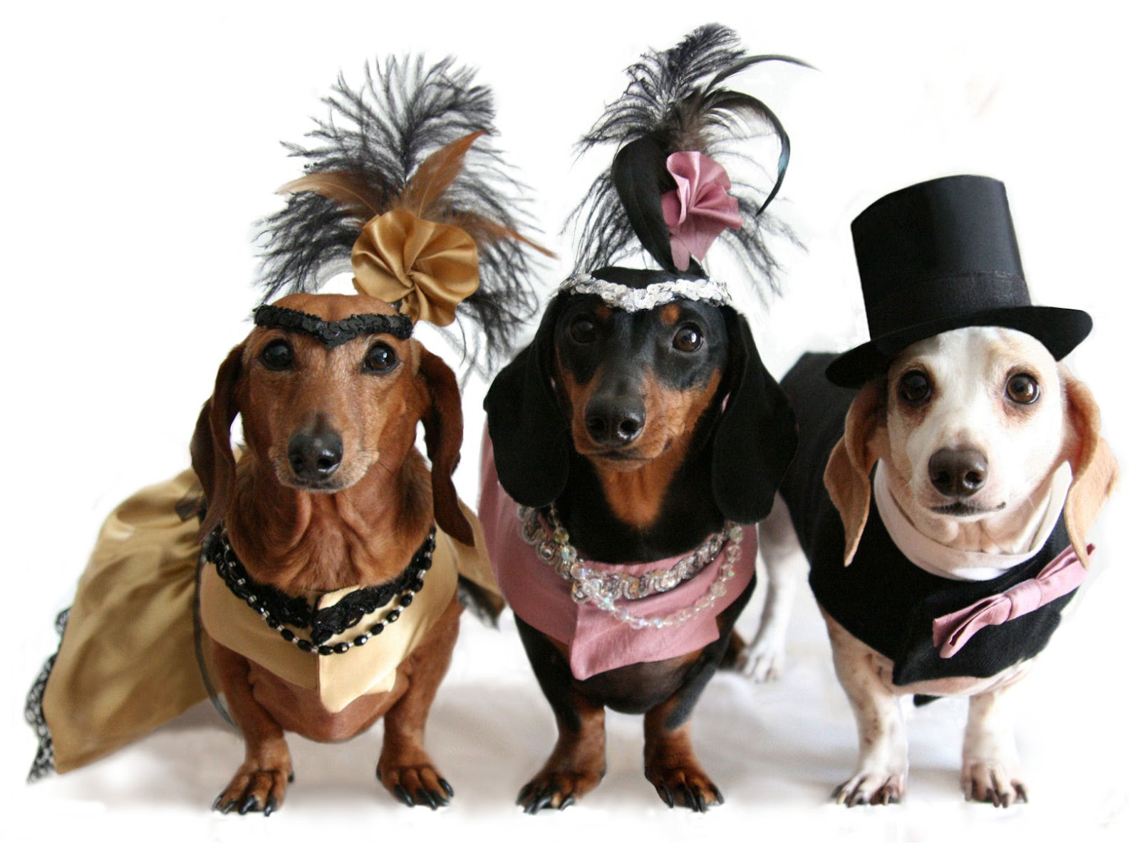 Maplewoodian.com: DOG PARK HALLOWEEN COSTUME CONTEST TODAY