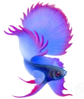 Picture Animated wallpaper images on Betta fish Animasi