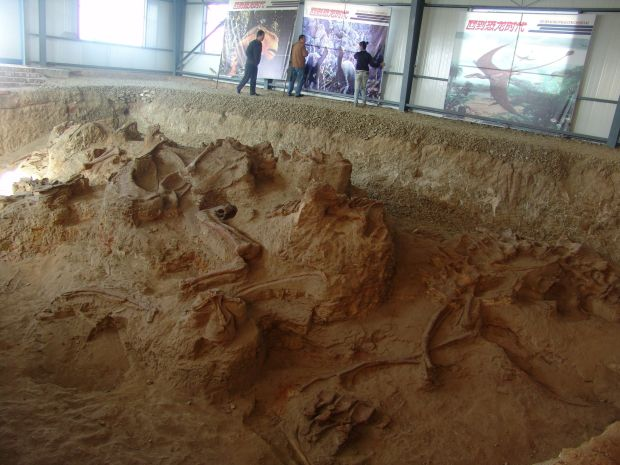 174-million-year-old sauropod dinosaur fossils discovered in China