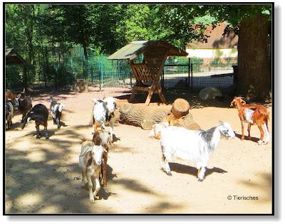 Streichelgehege im Tierpark Köthen