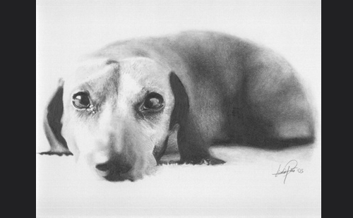09-Dachshund-Lisandro-Peña-Animal-Drawings-with-Attention-to-Minute-Details-www-designstack-co