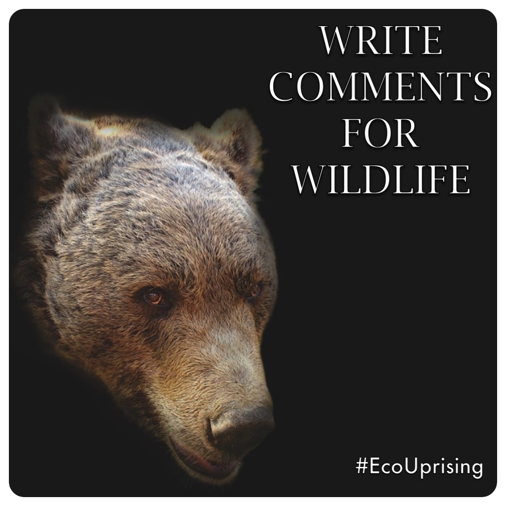 Don't Delist Grizzlies: PUBLIC COMMENTS To Oppose Baiting