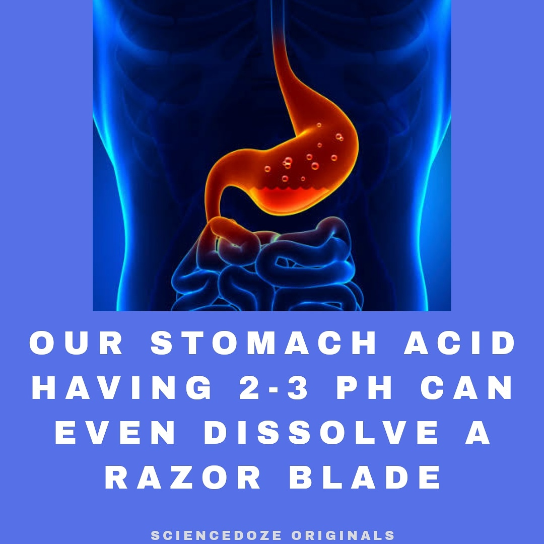what is the acid present in the stomach