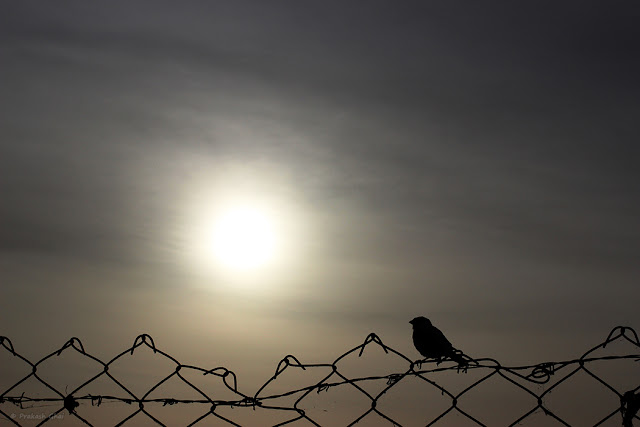 A Minimalist Photo of a sparrow sitting on a metal fence in front of Jal Mahal Jaipur.