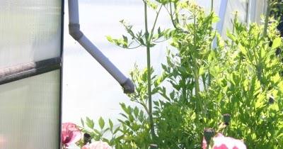 Gartensaison Ist Immer Gartentipps Von Eva Schumann Regenwasser