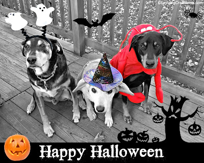 rescue dogs dressed up for Halloween