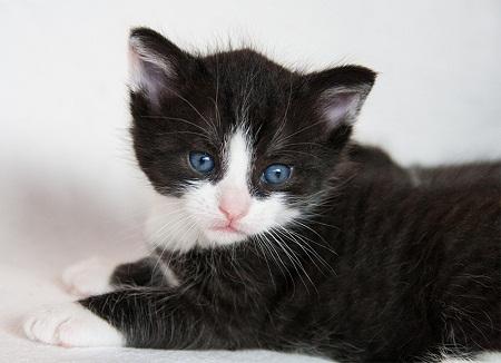 Beautiful Black & White Cat Picture