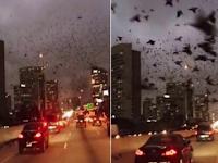Merinding! Setelah Masjid Dibakar, Ribuan Burung Hitam Bersuara Menakutkan Serbu Wilayah Texas